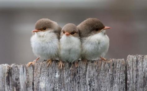 Beautiful-Birds-Family-Photos-540x337